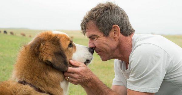 A Dog's Purpose Movie Review MovieSpoon.com
